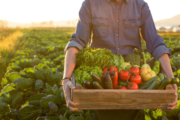 Should I buy Organic Food Oakville